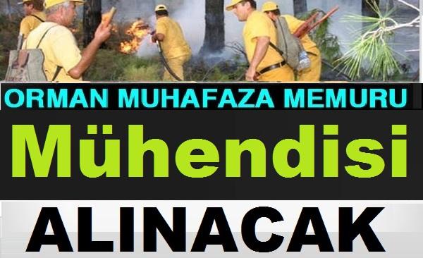 Orman Genel Müdürlüğü 3 Bin 900 Lira Maaşlı Kamudan Kariyer Devlet Memuru Alımı