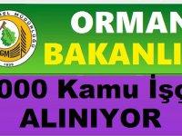 Orman Genel Müdürlüğü İşkur Vasıytasıyla OGM 1000 Kadrolu İşçi Alımı